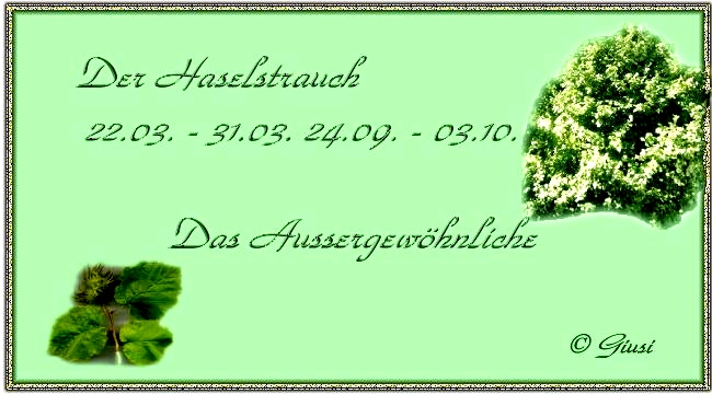 Haselstrauch 22.03. - 31.03. 24.09. - 03.10